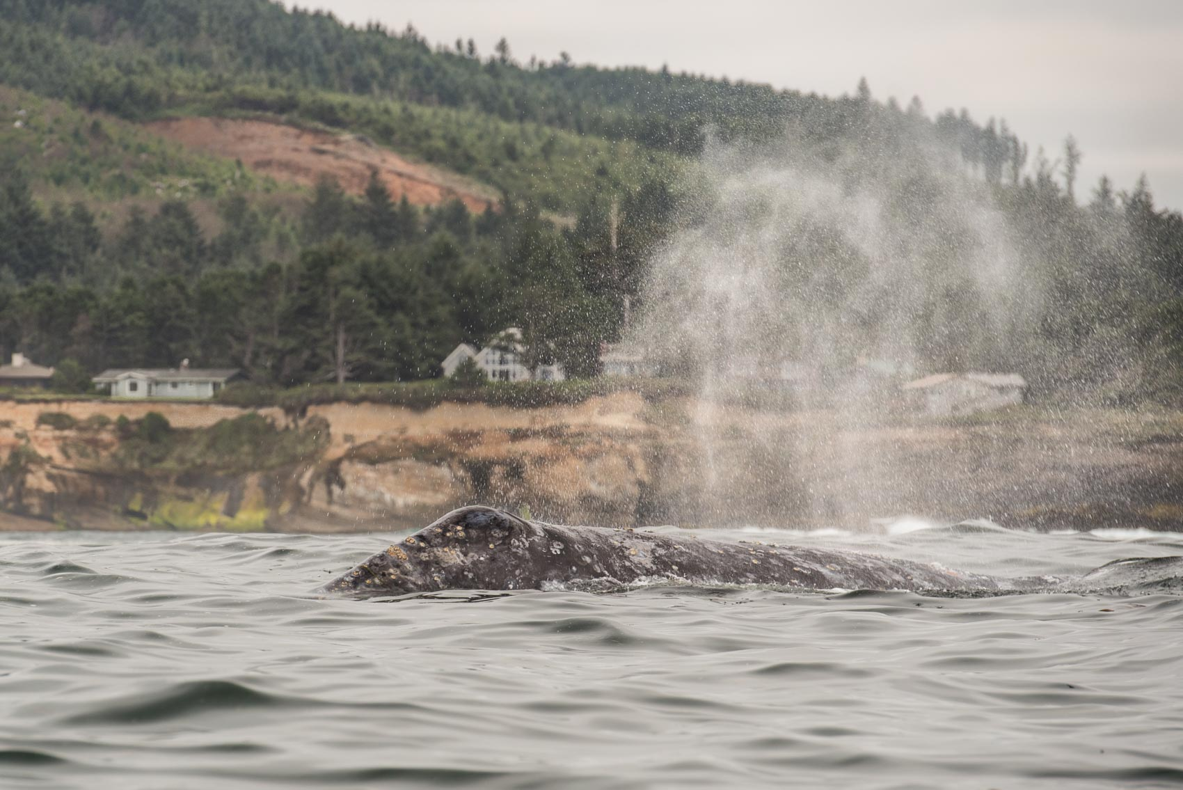 Whale Photography Workshop