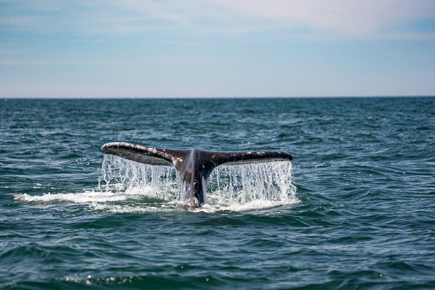 190714_whales_343
