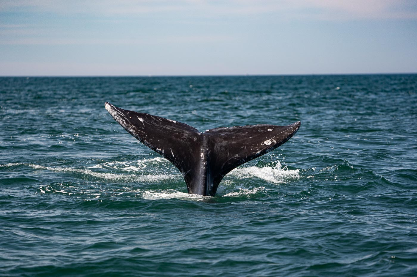 190714_whales_348